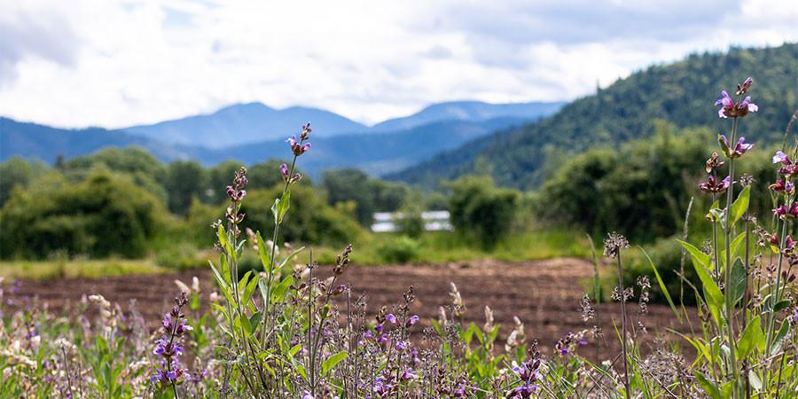 The Banyan Botanicals Farm landscape