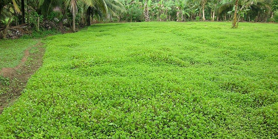 Brahmi field