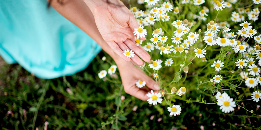 hands in meadow of daisies