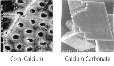 Microscopic images of coral calcium and calcium carbonate