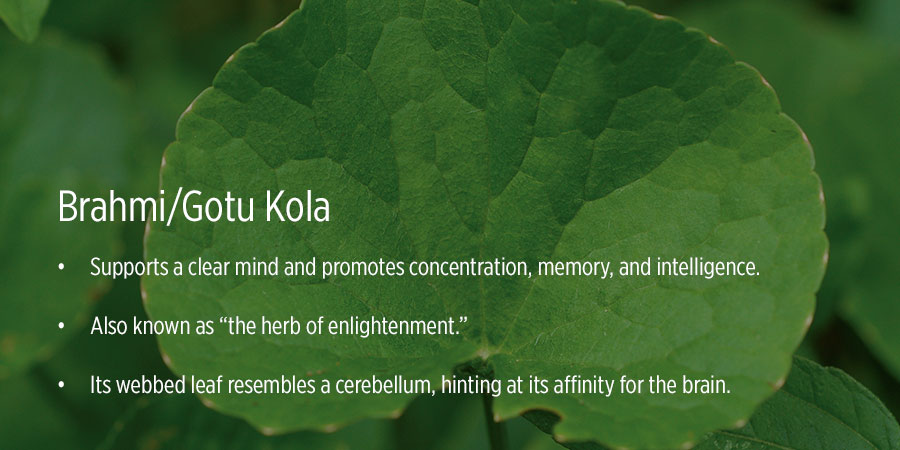 Brahmi/Gotu Kola benefits