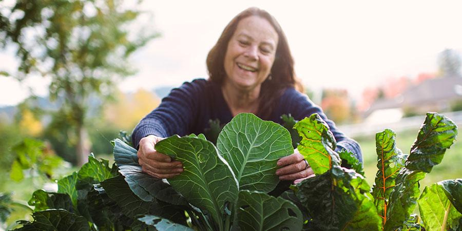 Banyan friend Kathleen harvests collard greens