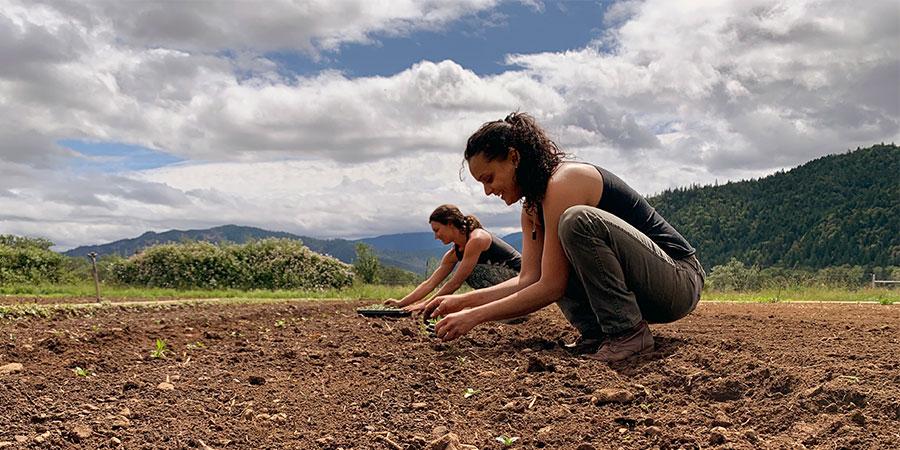 Staff tending the farm