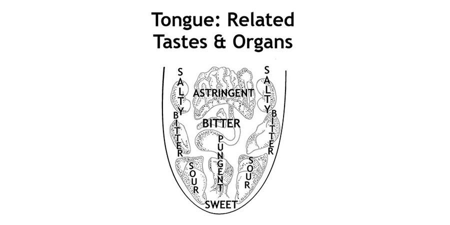 tongue and tastes diagram