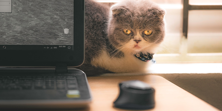 Cat in home office distracted by computer mouse