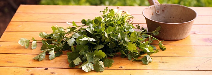Kapha-Pacifying Recipe: Cilantro Chutney