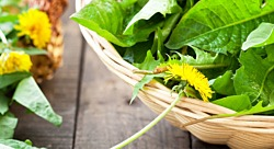 Kapha-Pacifying Recipe: Dandelion Greens with Lemon and Mint
