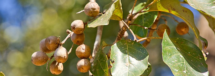 Introducing FairWild Triphala