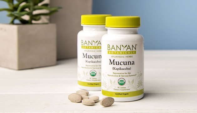Why Mucuna (Kapikacchu) Really Is That Amazing